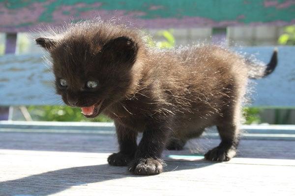 anxiety-kitty